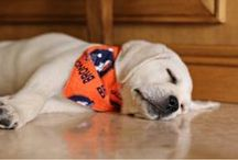 Denver Broncos TAILgaters / Denver Broncos TAILgaters - Dogs and other pet pictures, ideas, and fun products / merchandise