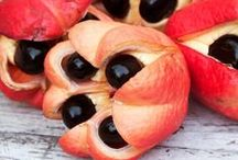 Ackee / The fruit is rich in essential fatty acids, vitamin A, zinc, and protein.  Seed extracts are used in the treatment of parasites. The ripe Jamaican ackee fruit is consumed to lower fever and to control dysentery.  A poultice of crushed ackee leaves is applied to the forehead to alleviate headaches.  The skin of the fruit can be used to heal ulcers.  For more information please visit http://www.lifegivingfoods.org/