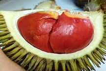Durian / Durian fruit contains a high amount of sugar, vitamin C, potassium, and the serotonergic amino acid tryptophan, and is a good source of carbohydrates, proteins, and fats.  It is recommended as a good source of raw fats by several raw food advocates.  In Malaysia, the leaves and roots used to be prescribed as an antipyretic. The leaf juice is applied on the head of a fever patient.  Other times, its roots are boiled then drunk.  For more info visit http://www.lifegivingfoods.org/