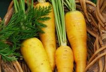 Yellow Carrots / Yellow carrots belong to the Umbelliferae family along with parsnips, fennel caraway, cumin and dill. Yellow carrots are available all year round, have a firm and crunchy texture and an earthy sweet flavour with notes of celery and parsley. Yellow carrots contain high levels of lutein, a pigment that is absorbed as Vitamin A in the body. They can be bought online at http://www.finefoodspecialist.co.uk/ For more info visit  http://www.lifegivingfoods.org/