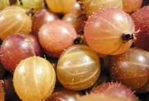 Gooseberry / http://www.lifegivingfoods.org/