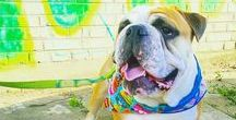 Bombur The Bulldog / Pierwszy w Polsce specjalista ds. nicnierobienia zaprasza na pracowity blog