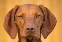 DOG ♥  / Dog pics / by Leann Gump