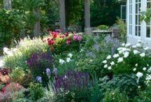 Glorious Garden  / by Rhonda Tornow