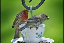 Birds of a Feather / by Rhonda Tornow