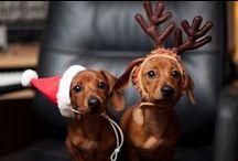 Holiday Pets
