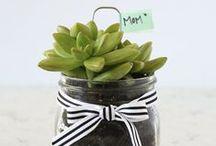 Gift Ideas / by Erin Borja