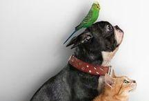 Pups, kitties, critters & al. ❤ / by Mercedes Fancellu