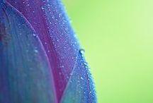 Colores Naturales
