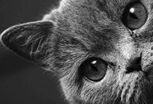 CATS!!!!!!!