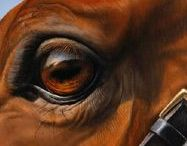 Horse art / The horse depicted in paintings