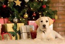 Holiday Pet Wellness
