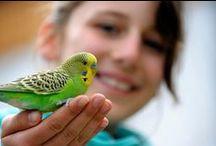 Adopt  a Rescue Bird