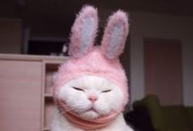Easter Pets! / Although giving chicks and bunnies for Easter gifts isn't usually a good idea, no one can argue that they aren't adorable! Here are some ideas for Easter fun with your pets!