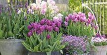 decoratie met bloemen en planten
