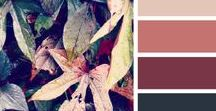 | Colour Pallets