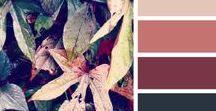 | Colour Pallets