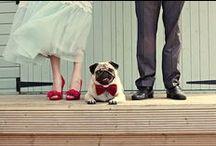 Wedding Day / by Hannah Bellinfante