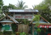 Experience 4 'Chiang Mai Monkey Centre' / Pins rondom de Chiang Mai Monkey Centre in Chiang Mai. Geïnteresseerd in inspirerende foto's van Thailand, Chiang Mai en apen in het algemeen #3MTT #NHTV