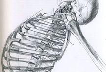 Drawing skeleton ref