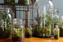 Terrarium envy of OuiTod / by OuiTod Boozé