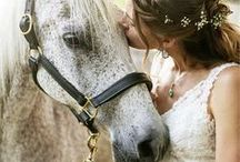 ♘ Beautiful Horses♞