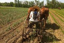 Farm Chore's / by Lilly Jordan