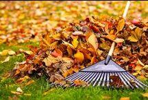 Fall Lawn Care / Fall Lawn Care