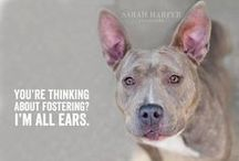 Can you help Foster?? / To foster email foster@k-9angelsrescue.org You provide a heart & home, we will provide everything else