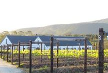 Newsteadwines.com / Weddings Celebrations  & Lunches in the Plettenberg Bay Winelands