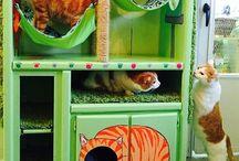Pet DIY / by samantha miles