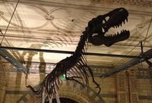 Natural History Museum / A collection of photos from the Natural History Museum!