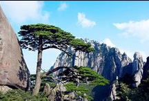 Huangshan Travel Pictures of Mild China Tours / This is a larger album of Huangshan travel resources than the travel gallery of Mild China - http://www.mildchina.com/jiangnan-travel-tips/huangshan-gallery.html