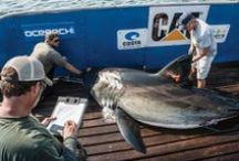 OCEARCH / by OCEARCH