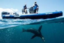 Expedition Galapagos / by OCEARCH