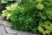 Garden / Bellissimo giardino