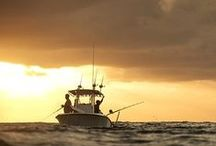 Expedition Brazil / by OCEARCH