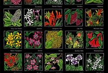 Australian Alphabets - Wildflowers & Wildlife - Linocuts / Australian wildflower & wildlife alphabets - Limited Edition Handpainted Linocuts by Lynette Weir - Australian Artist - Fine Art Linocuts NOTE: All Artwork/Works in Progress/Drawings/Designs/Photos are COPYRIGHT