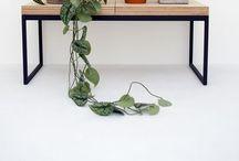 Lo verde / Plantas, plantas, plantas