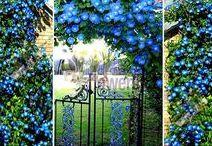 For my blue garden