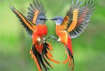 Beautiful Birds / by Rhonda Pearson