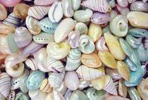 Seashells / by Rhonda Pearson