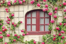 ~Wonderful Windows~