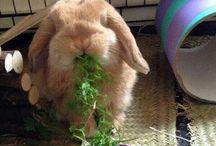LOL bunnies