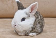 Baby bunnies !!!