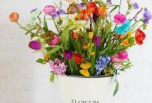 Flowers&Gardening