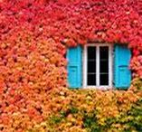16. ramen / windows