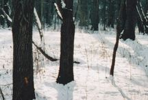 On the Fringes of the Forest / God's Beautiful Creation