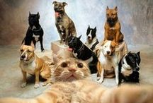 Dogs|Puppies|Cats|Kittens / Our favorite fluffy animals & pets / by ‿✿⁀°•. ๓เςђєllє • ๓ςςคгtץ °•.‿✿⁀⁀°