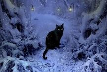 Black Cats are Beautiful / .
